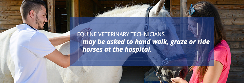 There are many different tasks that an equine vet tech performs which include hand walking, grazing or riding