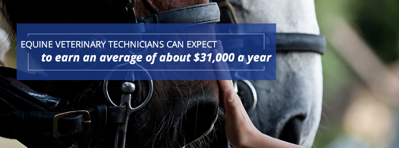 Equine Veterinary Technicians can earn up to an average salary of $31,000 a year