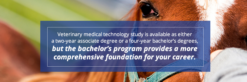 Wilson College Equine Veterinary Medical Technician Degree