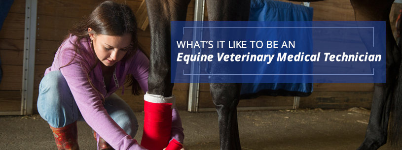 Whats it like to be an equine vet technician